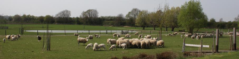 brecht-en-schapen-2009-001