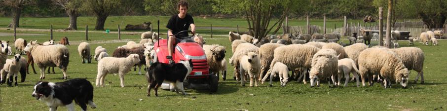 brecht-en-schapen-2009-008
