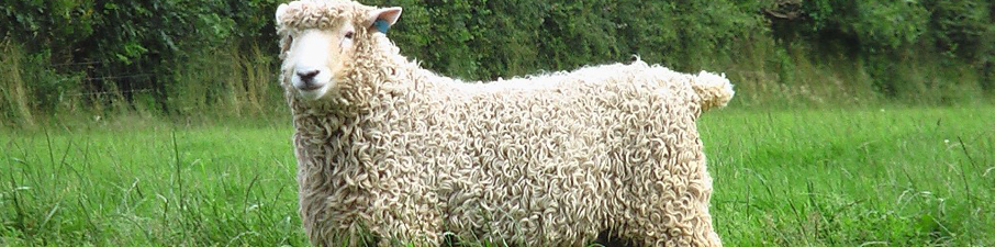 devon-cornwall-longwool